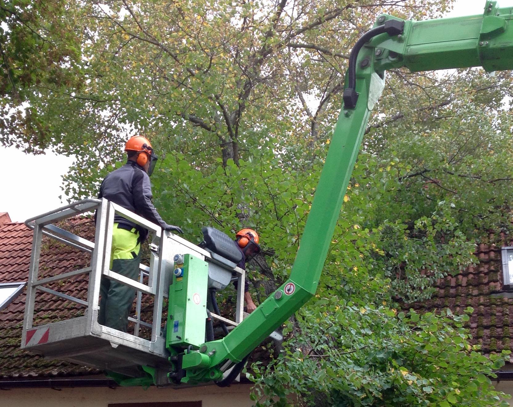 Baumpflegearbeiten im Stadtgebiet