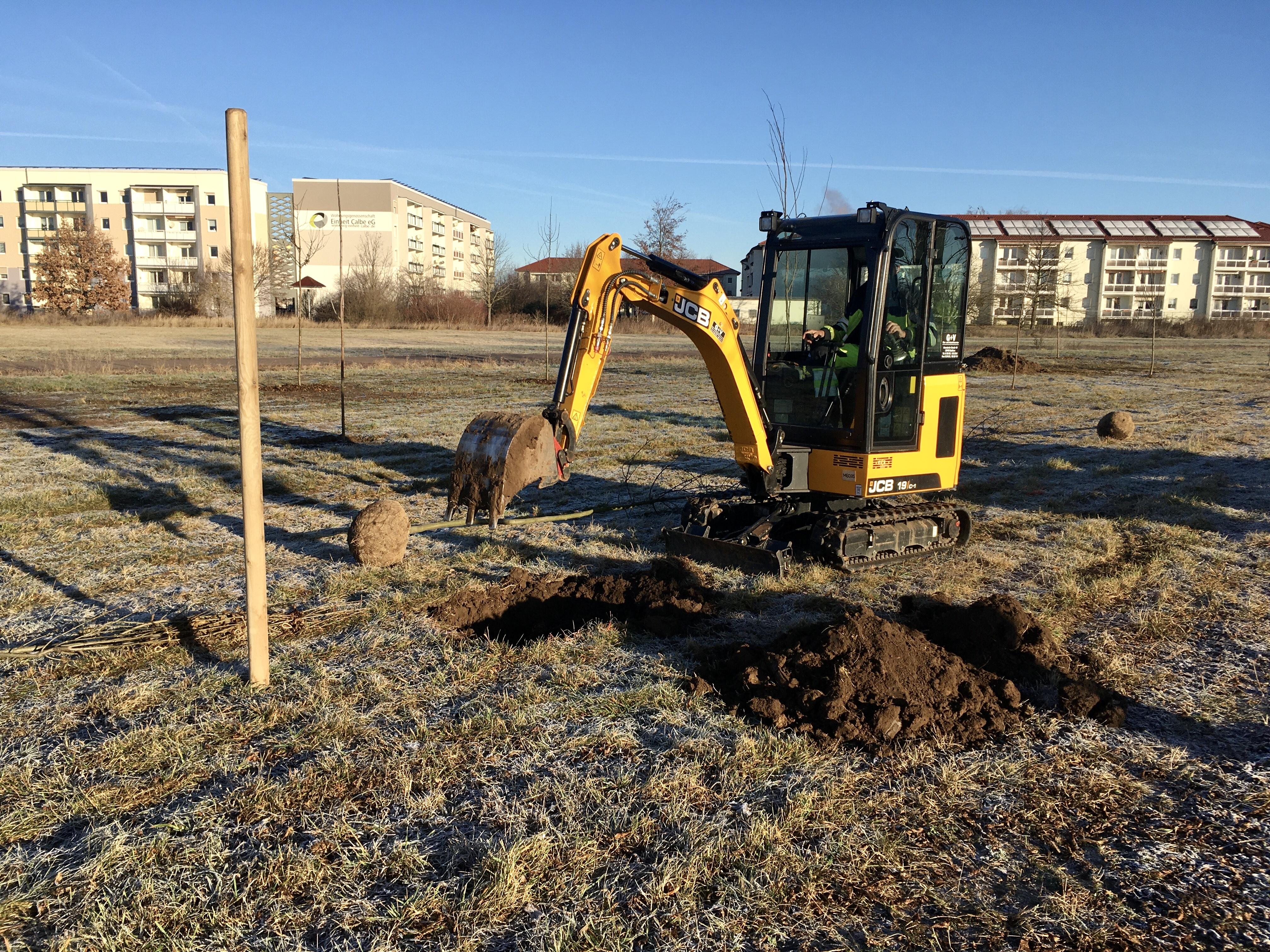Mitarbeiter des Baubetriebshofes Calbe pflanzten Ende Januar 34 Bäume als Ausgleich im Rahmen der Herstellung eines Radweges zwischen Ortsausgang und dem Gewerbegebiet West