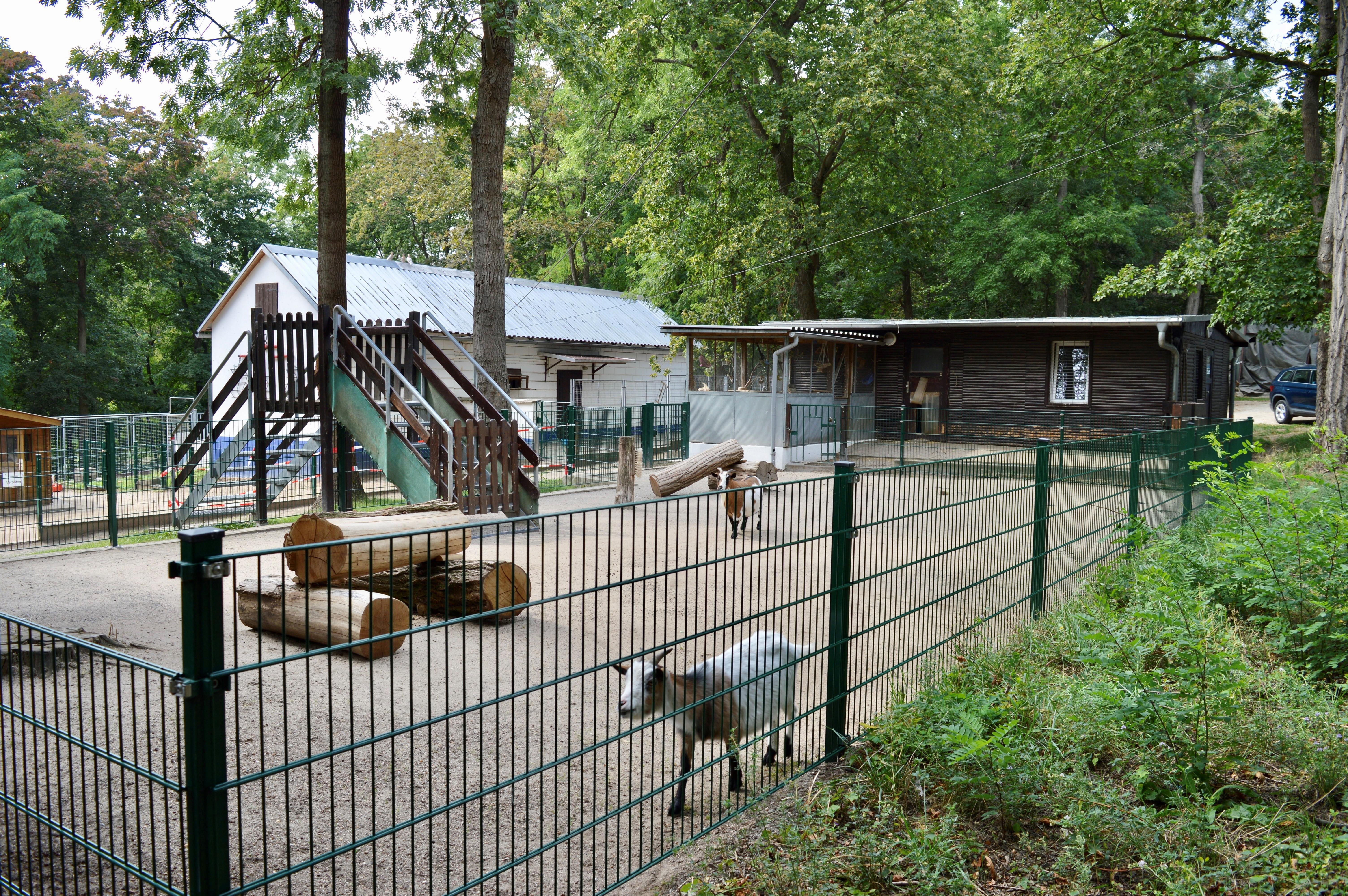 Im Streichelgehege auf dem Wartenberg können alle großen und kleinen Besucher Ziegen hautnah erleben.